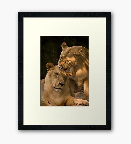 Sisterly love Framed Print