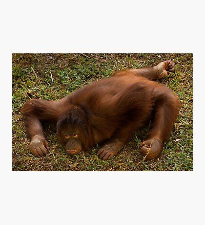 Crouching Ape, Hidden Assets Photographic Print