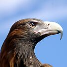 Eagle Eye 3 by Andrew Wilson