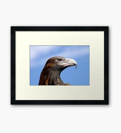 Eagle Eye 3 Framed Art Print
