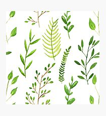 Watercolor herbs Photographic Print