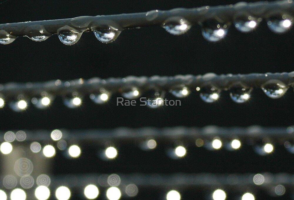 droplets by Rae Stanton