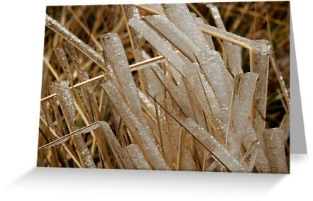 Ice grass by Heidi Wernicke