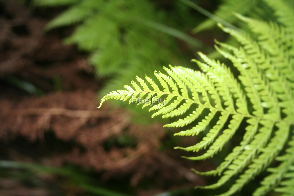 leaf by beejay