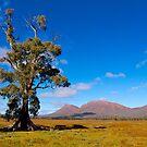 Cazneaux Tree, Wilpena, South Australia. (Study #4) by johnrf