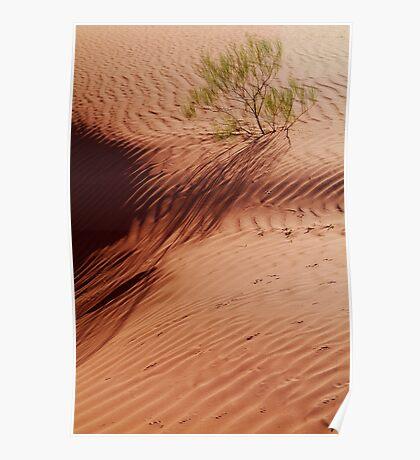 Lone Shrub and Sand Patterns, Simpson Desert Poster