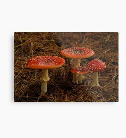 Red Fungi,Otway Ranges Metal Print