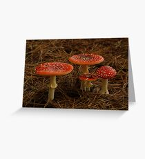 Red Fungi,Otway Ranges Greeting Card