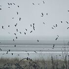 Winter birds over Pegwell shore in early February by chihuahuashower