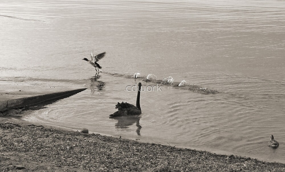 Lake Taupo Early Morning in Sepia by cdwork