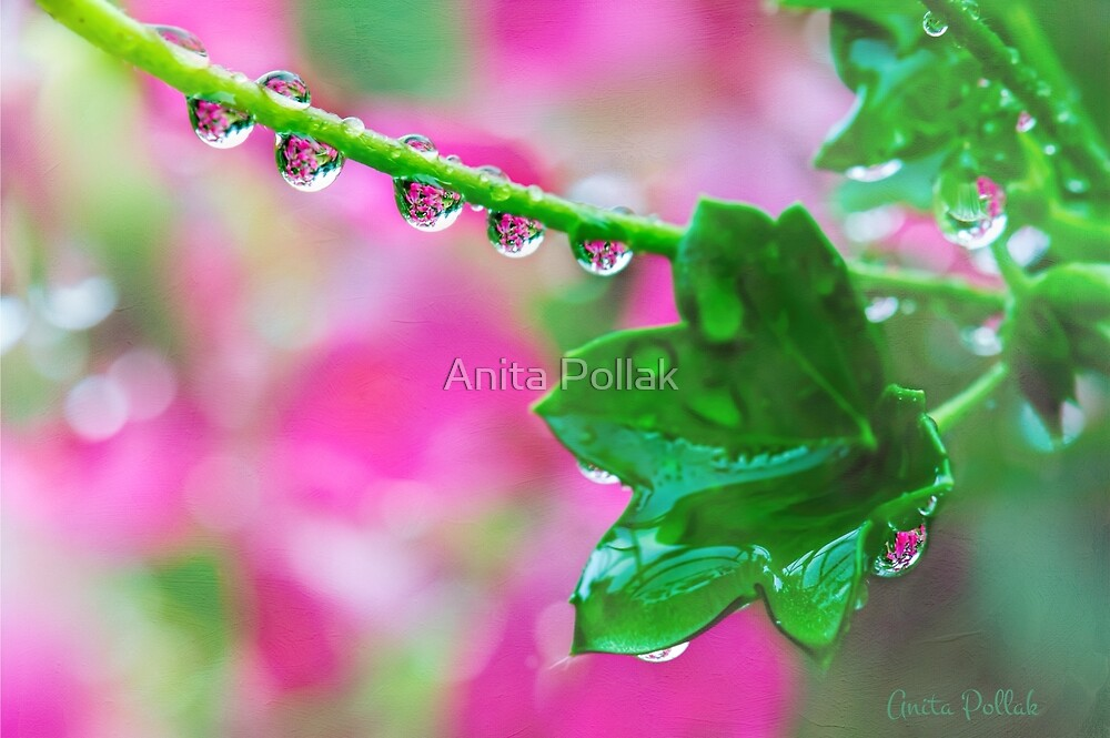Pink Geranium Reflections After the Rain by Anita Pollak