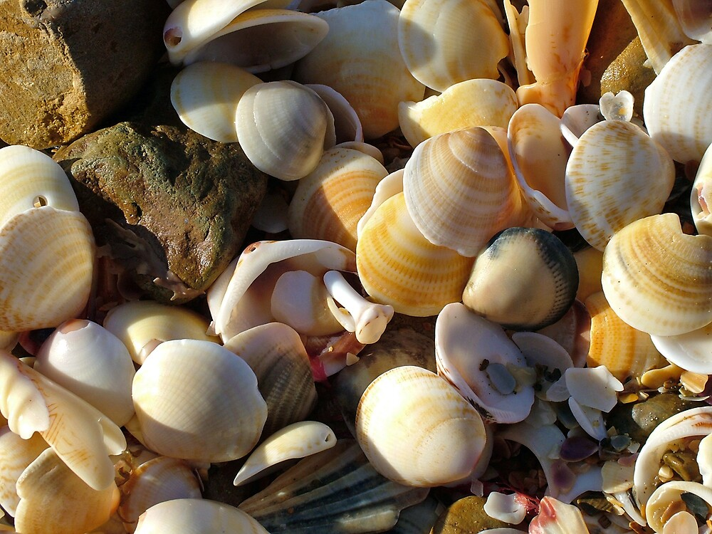 Sea Shells by JennyDiane
