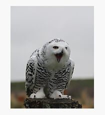 Screaming Hedwig (Snowy Owl) Photographic Print