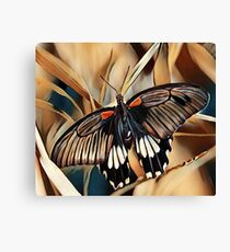 Black, White and Orange Butterfly Canvas Print