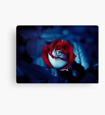 One Red Rose - High-Resolution Photo Canvas Print