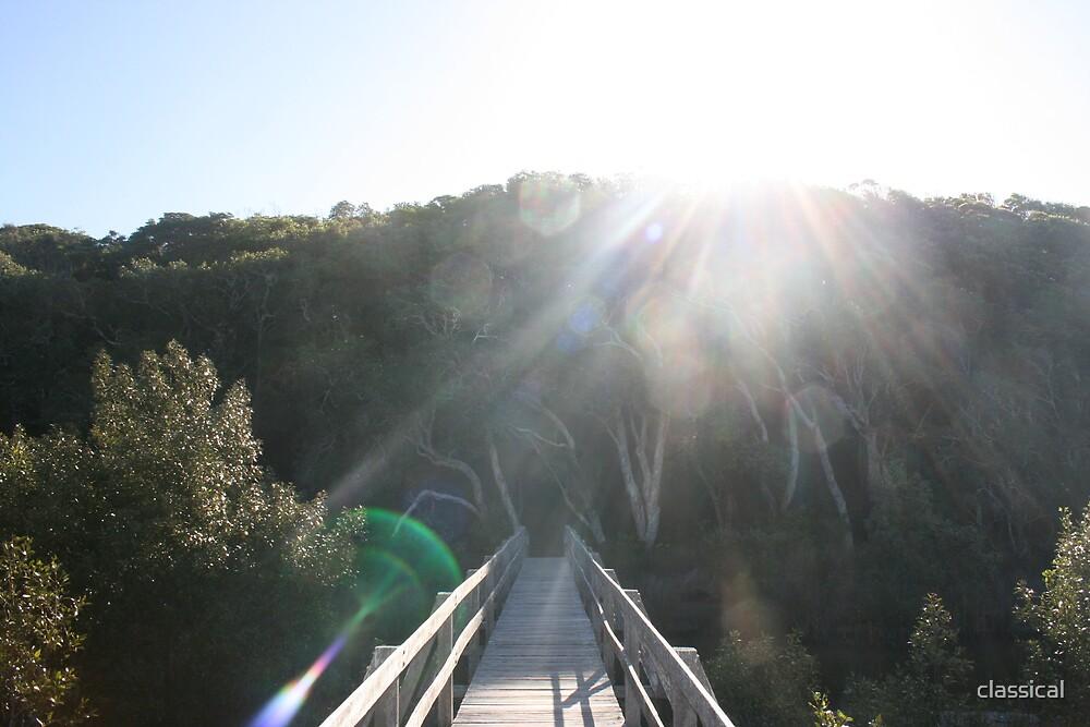 Mangrove bridge by classical