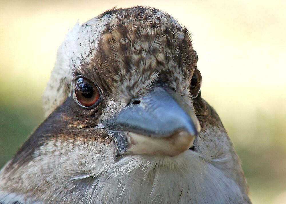 Kookaburra by Ally