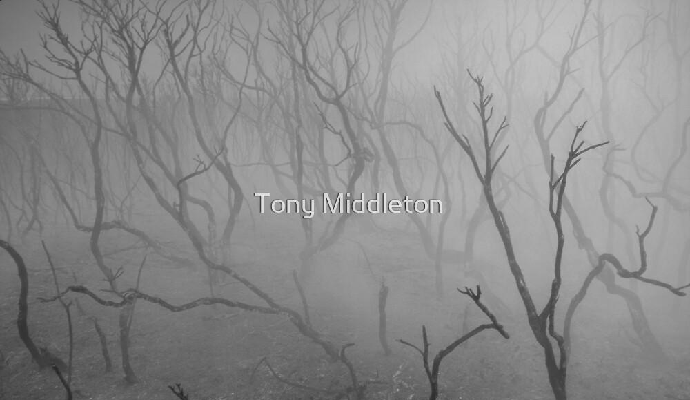 smouldering by Tony Middleton