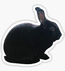 Black Rex Rabbit Sticker