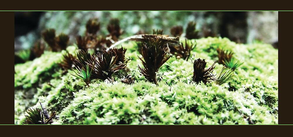 Young Foliage by LukeGD