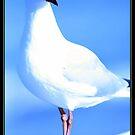 Seagull 3 by Simone C