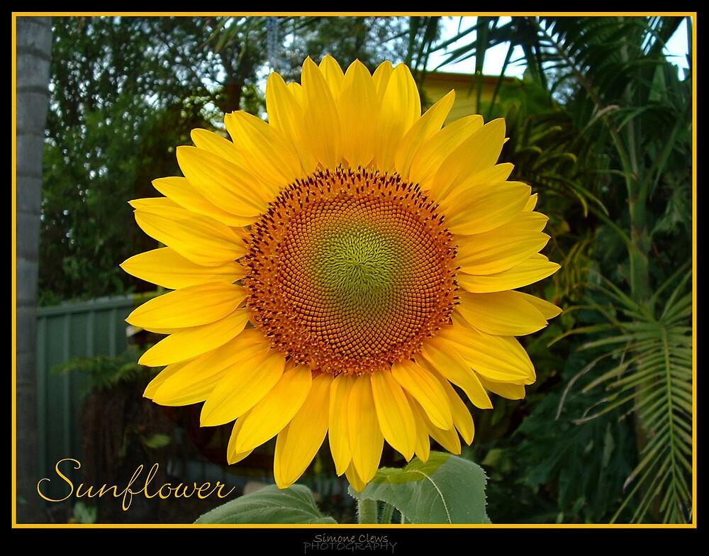 Sunflower by Simone C