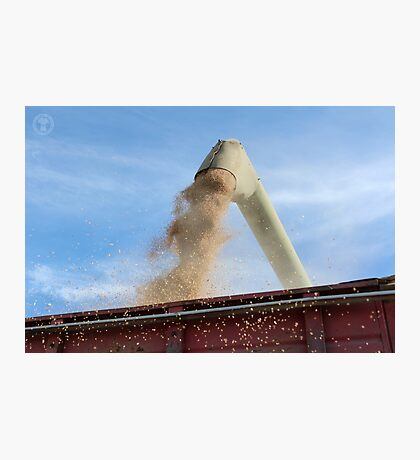 Auger Unloading Photographic Print