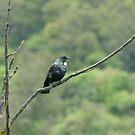 Tui by Sharon Brown