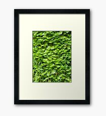 Green Wall Framed Print