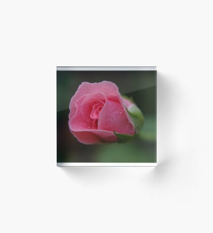 The rose called Dearest   Acrylic Block