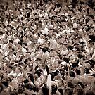 Content Crowd by Edward Shepherd