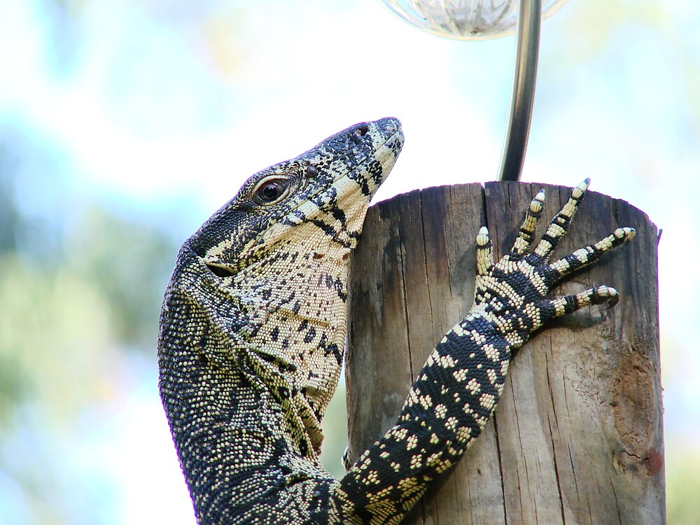 """""""The Lookout"""" Lace Monitor by diddle"""