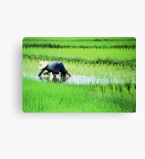 All in a Days Work Canvas Print
