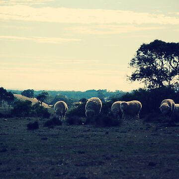 sheep grazing I by LucidPieces