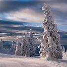 Silverstar by David Sundstrom