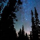 Rocky Mountain Forest Night by Bo Insogna