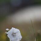 Seaside flower by Tiina M Niskanen