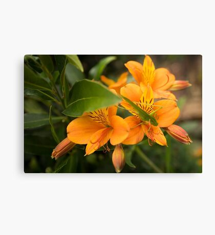 Not quite Camouflaged Canvas Print