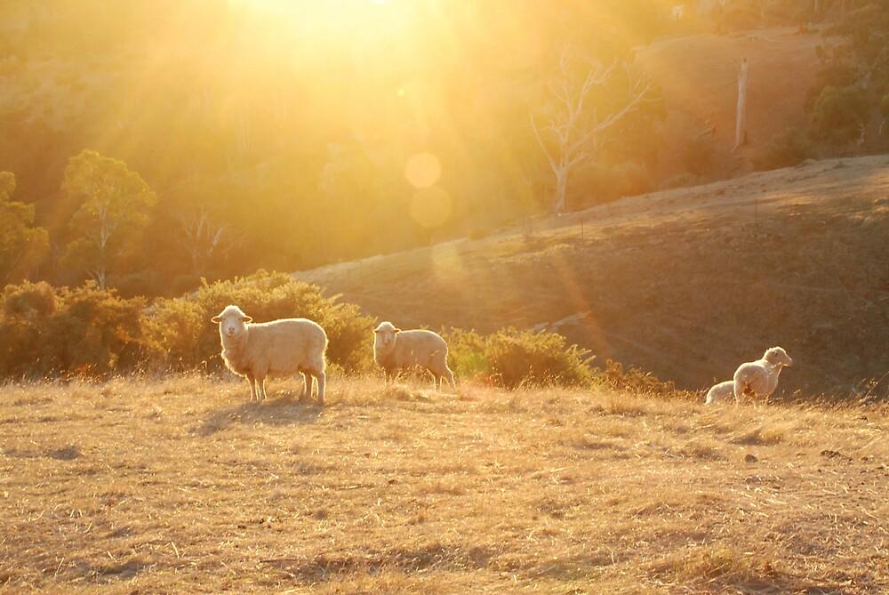 sheep grazing III by Janet Leadbeater