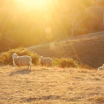 sheep grazing III by LucidPieces