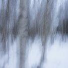 Winter birches by Tiina M Niskanen