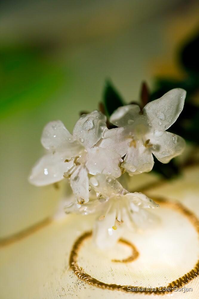 Dainty Blossom by Samantha Cole-Surjan