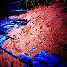 Red Sand by Gavin