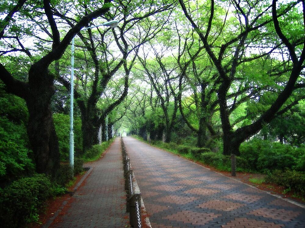 Aoyama Cemetery by Sally Li