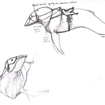 Cetacean Ver. 3 - Mysticeti by SugarSniper