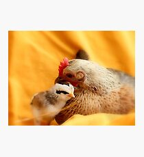 Oh!! How I Adore Motherhood!! - Hen And Chick - NZ Photographic Print