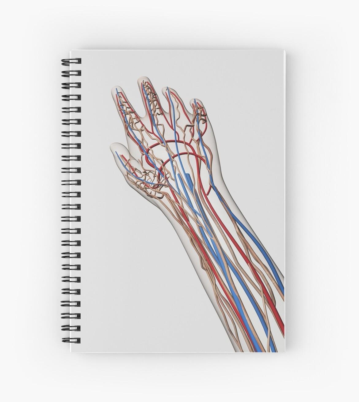 Cuadernos de espiral «Ilustración médica de arterias, venas y ...