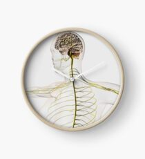 Medical illustration of the human nervous system and brain. Clock