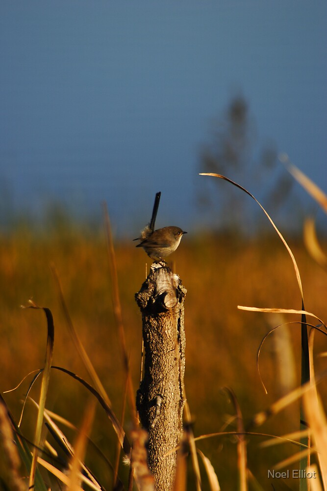Small Bird #1 by Noel Elliot