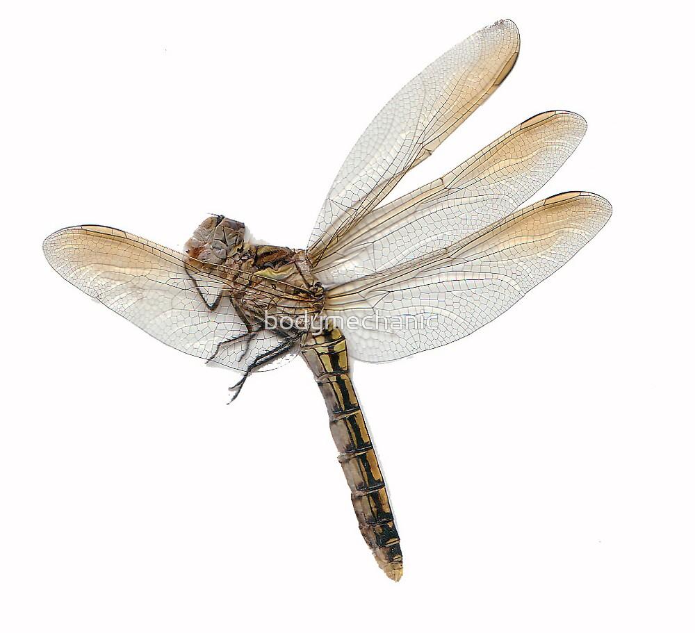 dragonfly2 by bodymechanic